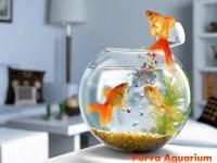 Purva Aquarium & Pets